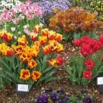 3/17/2013 Dallas Blooms (134)