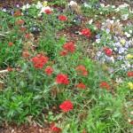 3/17/2013 Dallas Blooms (15)