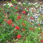 3/17/2013 Dallas Blooms (16)
