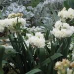 3/17/2013 Dallas Blooms (33)