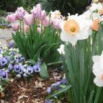 3/17/2013 Dallas Blooms (36)
