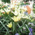 3/17/2013 Dallas Blooms (39)