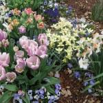 3/17/2013 Dallas Blooms (40)