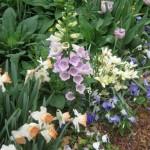 3/17/2013 Dallas Blooms (43)