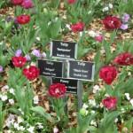 3/17/2013 Dallas Blooms (46)