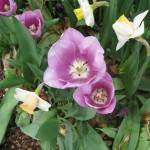 3/17/2013 Dallas Blooms (49)