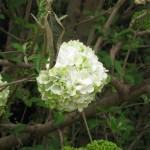 3/17/2013 Dallas Blooms (76)