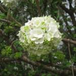 3/17/2013 Dallas Blooms (77)