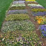 3/17/2013 Dallas Blooms (95)