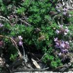 Veggie Garden Seedlings and Sneak Peeks (1)