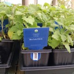 20160401 Organic herbs at Whole Foods Market